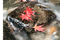 Attitudinal Healing Japan